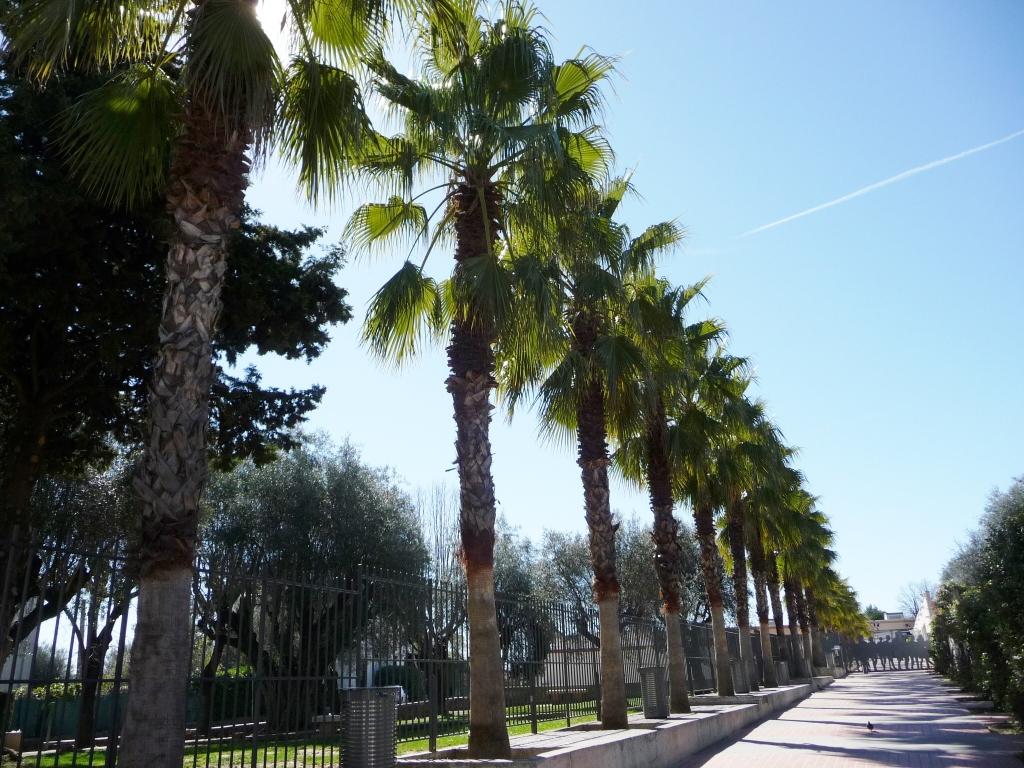Palmiers Vence 011
