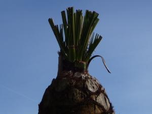 Palmiers Vence 019