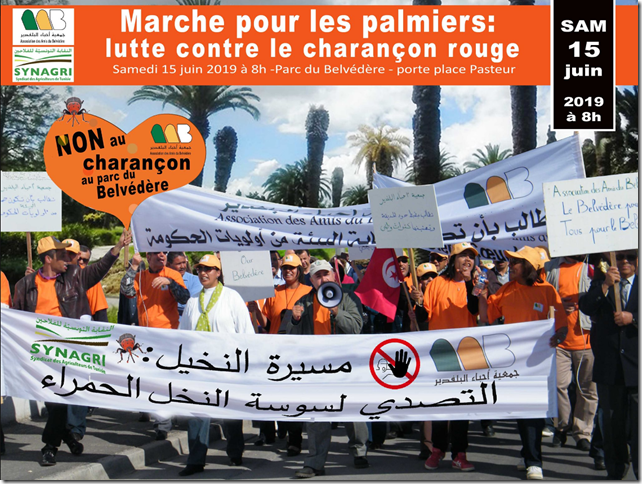 marche collectif 4C tunis